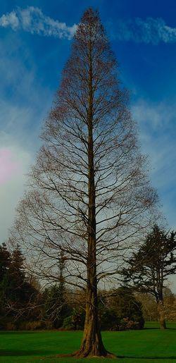 Sky Tree Low