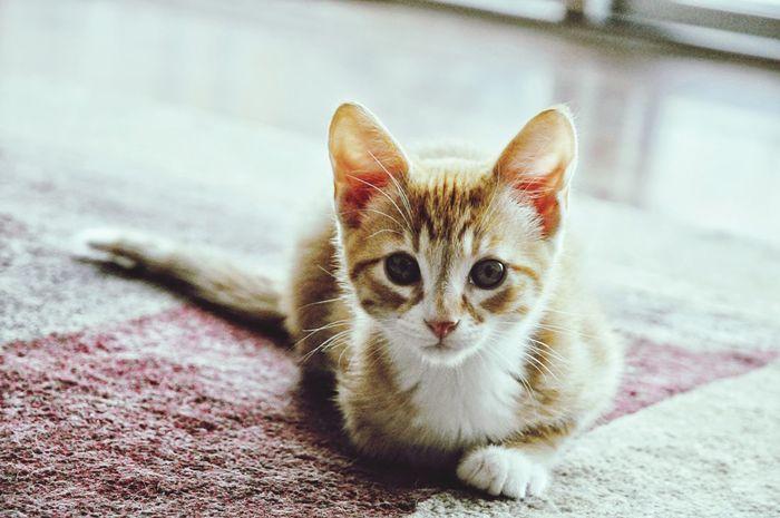 Kittens My Pets Ari