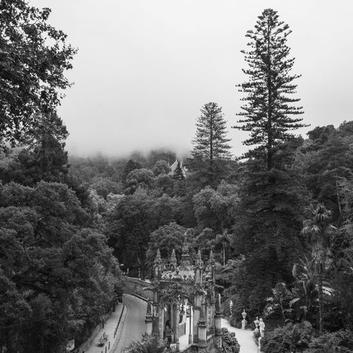 Portugal Sintra Architecture Beauty In Nature Blackandwhite Building Exterior Close-up Foggy Forest History Nature Outdoors Travel Tree