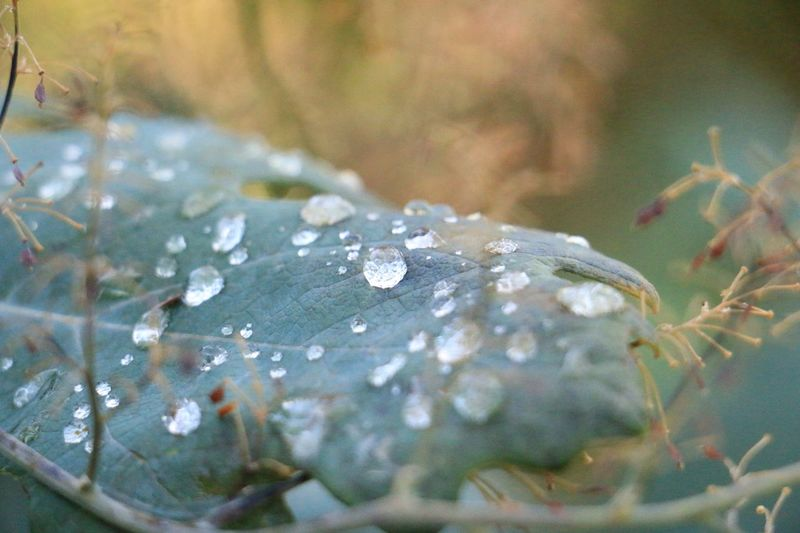 Drop Water Nature Close-up Leaf Beauty In Nature Fragility Day Selective Focus No People Wet Outdoors Growth Plant Freshness Animal Themes EyeEmNewHere Lost In The Landscape