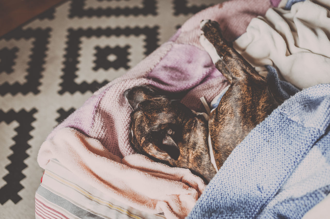 High angle view of pit bull dog sleeping on bed at home