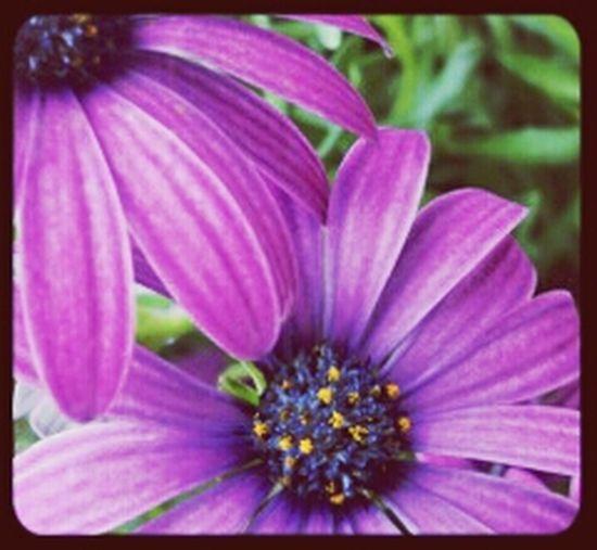 Flowers Kittanning, Pa Kittanning The EyeEm Facebook Cover Challenge