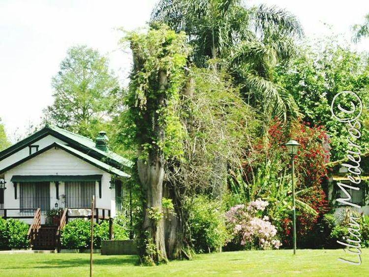 Tree Nature Landscape History Viagem Argentina Trip Vacations City Reflexão  No People Família Family Beauty In Nature
