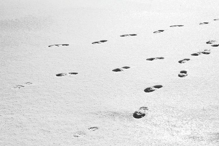 Nature FootPrint Monochrome Artistic Photo Black And White Blackandwhite Details White Photo Photography Blackandwhite Photography Abstract Nature Landscape Ice Winter Snow Landscape_photography Contaminated Nature Human Foot Conceptual People And Places