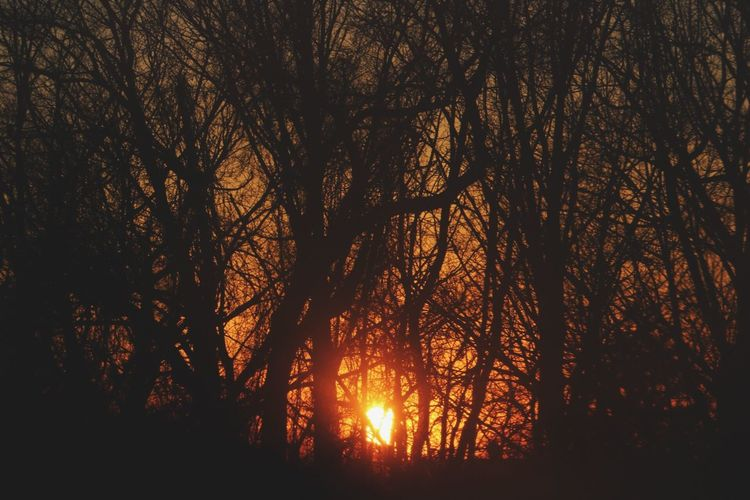 Sunset Nature Tree Sunlight No People Scenics Outdoors Backgrounds Sun Sky Day Tranquility Tranquil Scene Canonphotography Canon 70d Beauty Newyork Finding New Frontiers