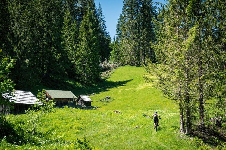 Woman mountain biking on footpath through alpine meadow, salzburg, austria