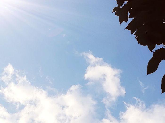 Sky Cloud - Sky Blue