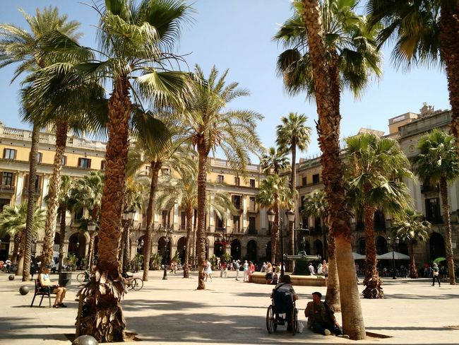 Tree Architecture Travel Tourism Travel Destinations Palm Tree City Vacations Outdoors Building Exterior People Day Adult Exquisite Ordinary Day Places To See Beautiful ♥ Romantic City Spainish Architecture, Spain Barcelona, Spain Summertime