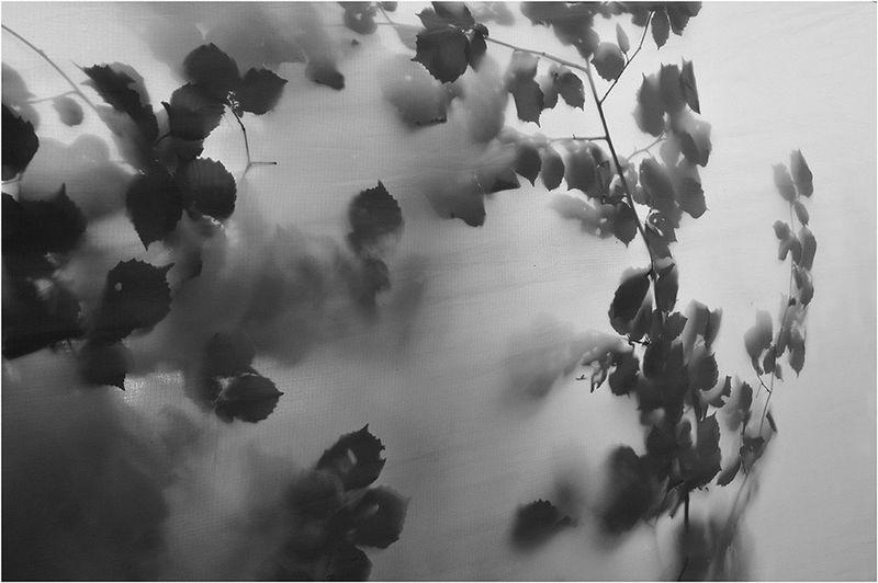 #Art d'Oise Festival #quadrapella Minima #grid #prieuresaintnicolasdecourson #noir&blanc #blackandwithe #compiegneforest #foretdecompiegne #france #festival #oise #picardie #picardy #agilphoto Gilgiuglio