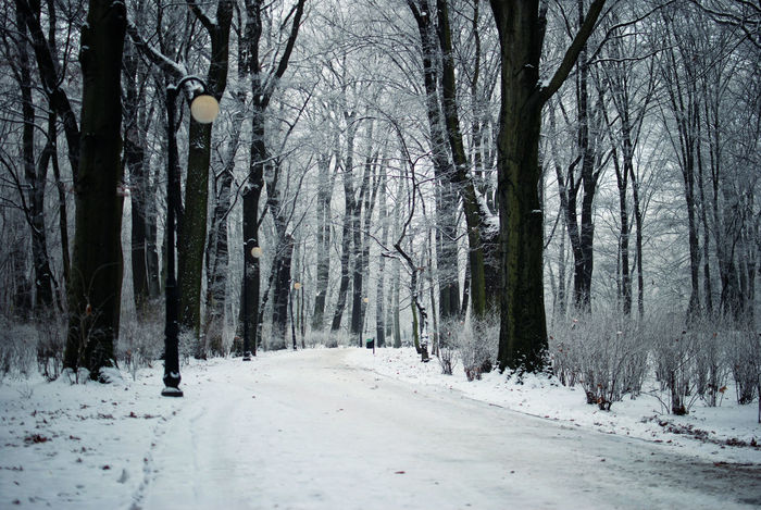 Beauty In Nature Branch Cold Temperature Day Discover Your City Forest Frost Growth Landscape Light And Shadow Nature Nikon No People Outdoors Scenics Sky Snow The Week Of Eyeem Tranquil Scene Tranquility Tree Tree Trunk Winter Winter