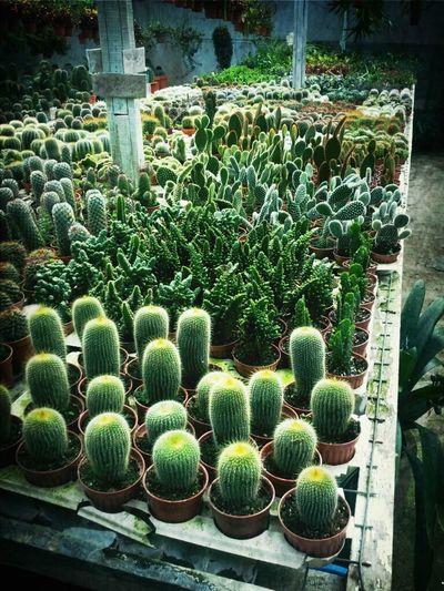 Flowers Nature Cactus
