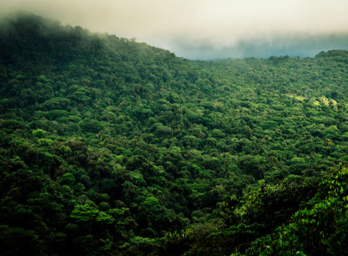 The rainforest near Monte Verde, Costa Rica Beauty In Nature Betterlandscapes Costa Rica Day Forest Freshness Green Green Color Growth Landscape Lush Foliage Mountain Nature No People Outdoors Rainforest Scenics Sky Tea Crop Tranquil Scene Tranquility Tree
