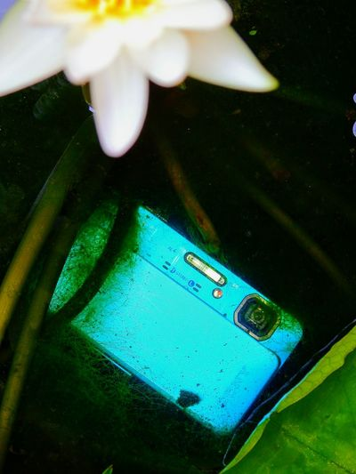 My favorite camera, waterproof about 5 meters. High Angle View Green Color No People Day Close-up Camera Camera Life Is My Life! Waterproof Camera Camerafun Beauty In Nature Black Background EyeEm Nature Lover Focus On Foreground Travelling Thailand Selective Focus EyeEmBestPics Nature Enjoying Life ZoomInToDetail Zoom Shot EyeEm Best Shots Outdoors Waterlily Flower Petal