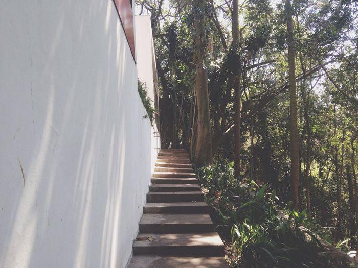 Stairs Architectural Detail Garden lina m Bardi