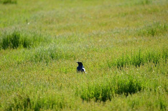 Taking Photos Enjoying Life Wilderness Bird Photography Birds🐦⛅ Bird Watching FlyingSolo Outside