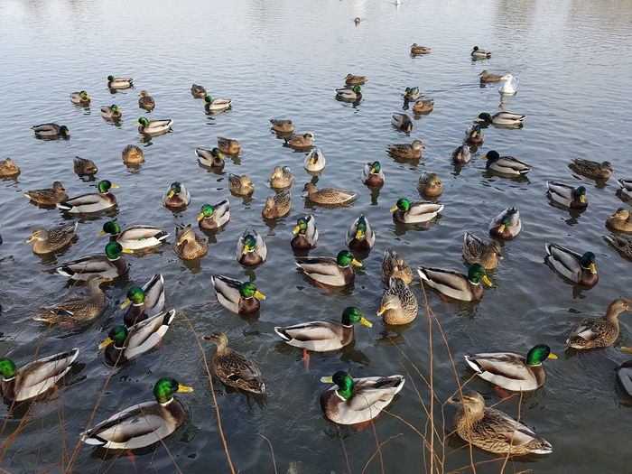 High angle view of birds in lake