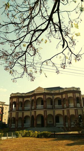 苦苓老樹正訴說著這老建築曾經見證過的百年往事...