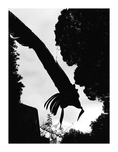L'impasse Transfer Print Auto Post Production Filter Tree Silhouette Nature Plant Sky Low Angle View Animal Themes No People Day Flying Animal Animal Wildlife