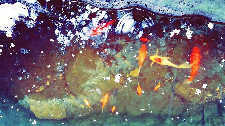 Holiday POV Naturelovers Nature On Your Doorstep Fish Under The Sea Water Reflections The Week On EyeEm