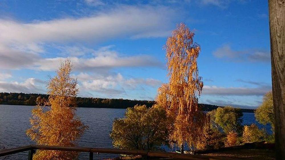 Labrīt! Autumn Goldenseason Morning Lielvardes_osta Daugava