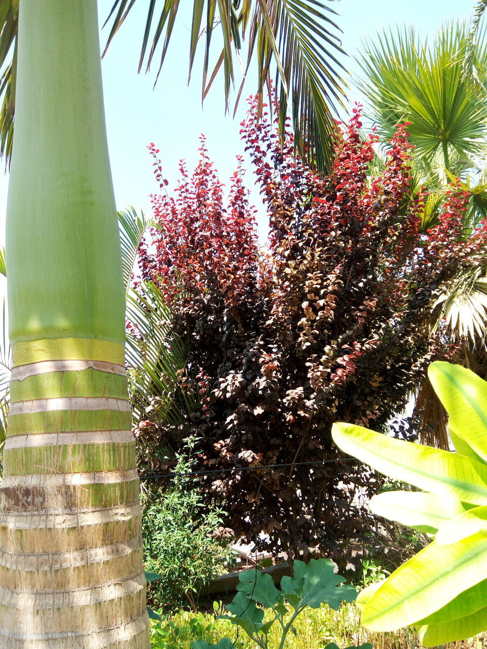 growth, tree, day, nature, outdoors, no people, tranquility, plant, sunlight, beauty in nature, flower, palm tree, freshness, fragility, close-up, sky
