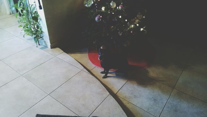 Waiting for Santa Hanging Out Christmas Fun Animal Themes
