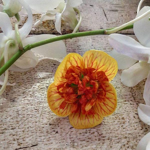 Hawaii Tropical Flowers Quintaflower Myheartinshots