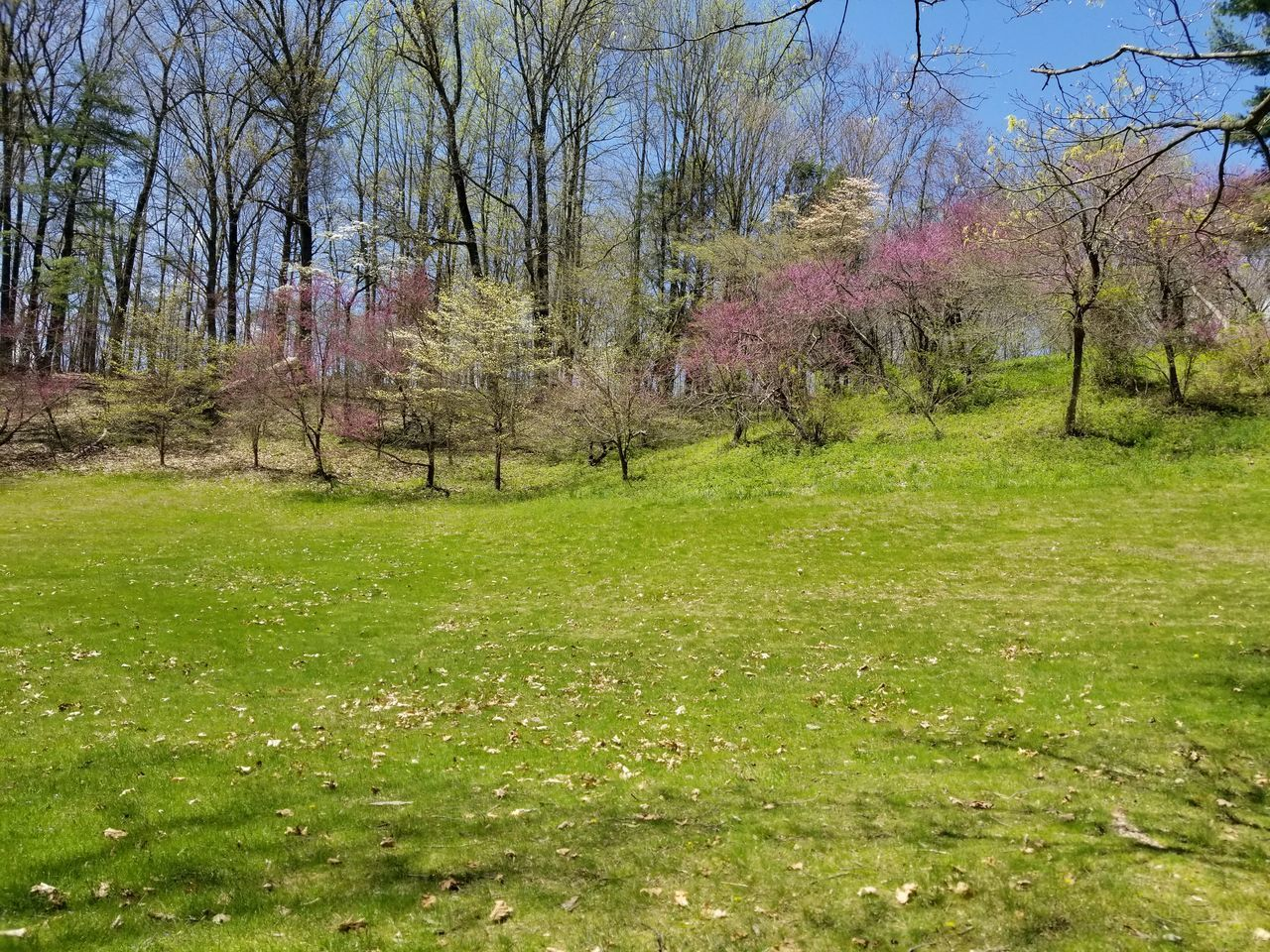 SCENIC VIEW OF GRASSY FIELD AND TREES