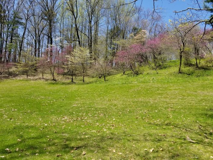 Scenic view of grassy field by trees
