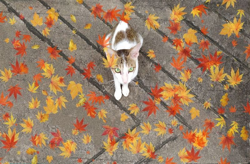 🍁🐱🍁 Whiskers