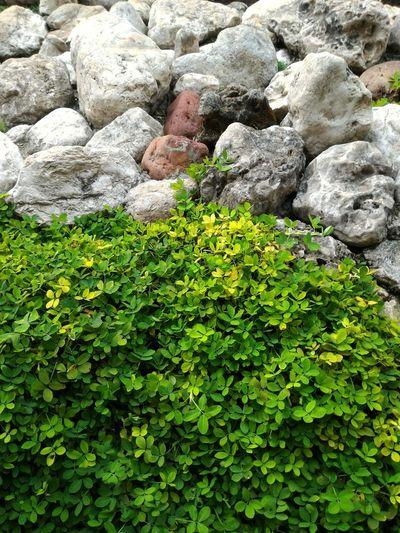 The balance of nature Nature Stone Garden Green Scenery