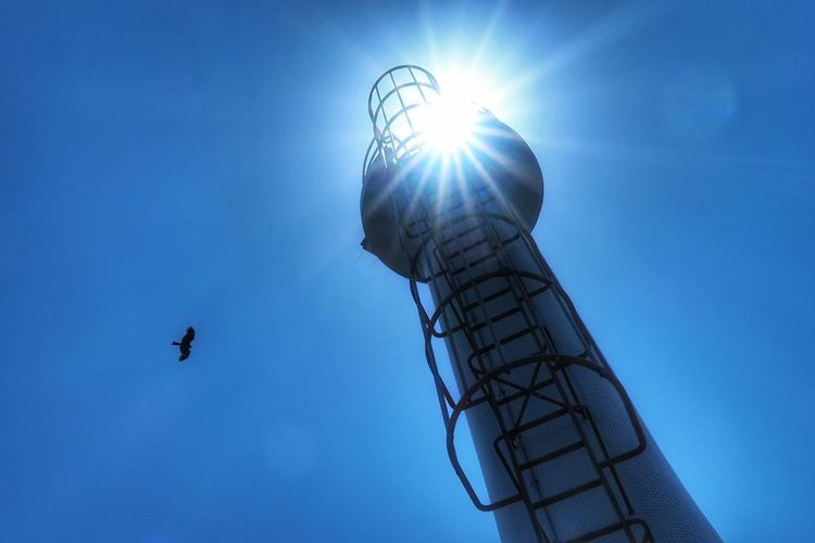 灯台 島原 空 青空 海 太陽 Lighthouse Sea Sky Blue Blue Sky Sun Sunlight Nature Bird Low Angle View Flying Outdoors Animal Themes Sunshine EyeEm Nature Lover EyeEm Best Shots Beauty In Nature 写真好き Landscape