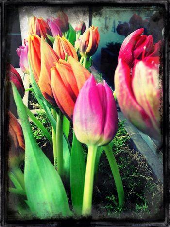Fleur & Plume
