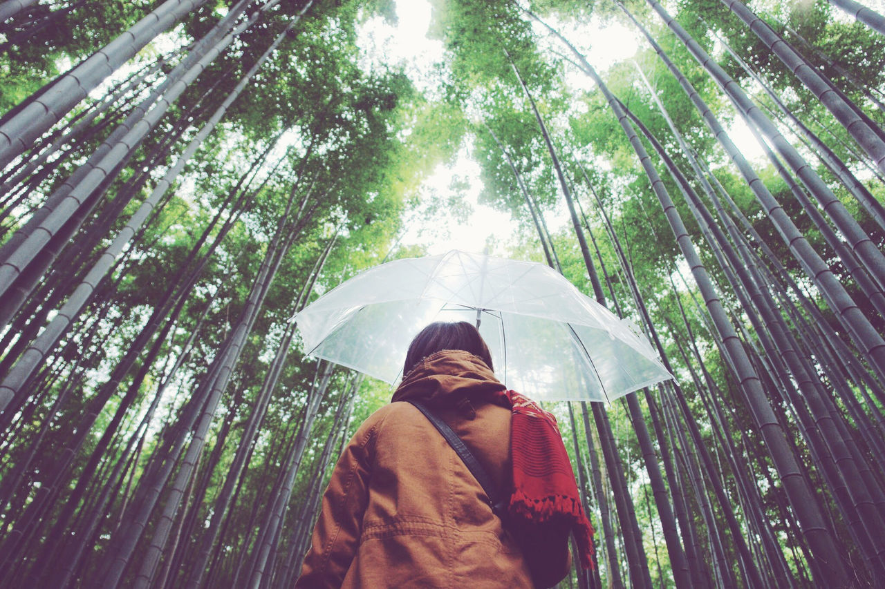 Low Angle View Of Woman With Umbrella Standing In Bamboo Forest