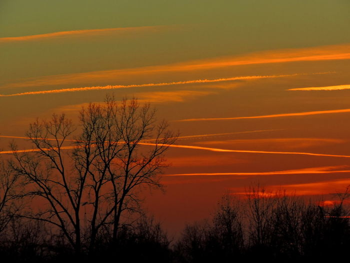 Vapor Trails In The Sky At Sunset Orange Color Sky Sunset Scenics - Nature Silhouette Beauty In Nature Tranquil Scene Tranquility Tree Plant No People Cloud - Sky Bare Tree Idyllic Nature Non-urban Scene Outdoors Environment Land Awe Romantic Sky