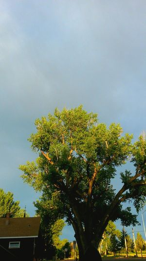 Church Tree Branches Sky Simplicity Blue Faded Summer Spring Wood Woodenchurch Cottonwood Beauty Nature Leaves