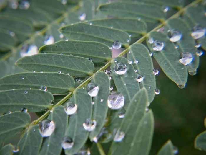 12.17.2016 Leaf Nature Wet Drop Plant Water Close-up Green Color Beauty In Nature Rain RainDrop Beauty In Nature Nature Dew Drops Morningdews Dews Plant Dew Green Color MorningDewdrops Dewdrops Morningdew Dewdrop Up Close