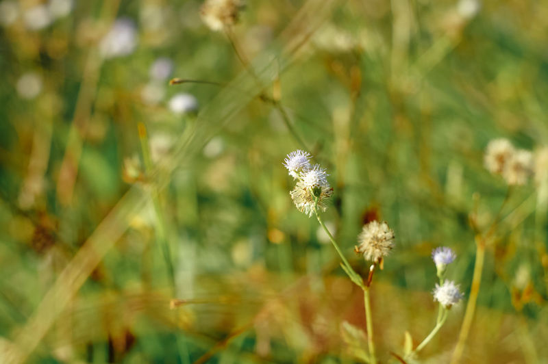 Close-up of white flowering plant on land