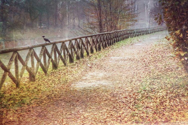 Autumn, the