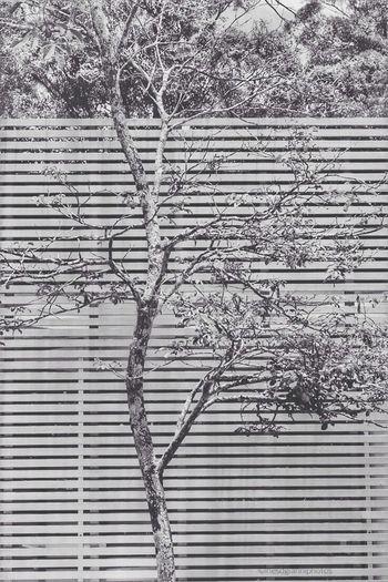Ey4photography Taking Photos EyeEm Gallery EyeEm Best Shots Showcase: February Brazilian Gallery EyeEm Best Shots - Black + White Trees TreePorn Tree_collection
