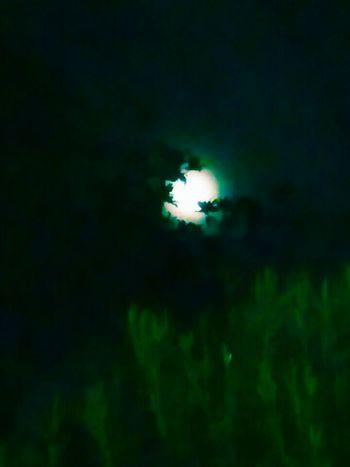 Full Moon peeking between the trees First Eyeem Photo