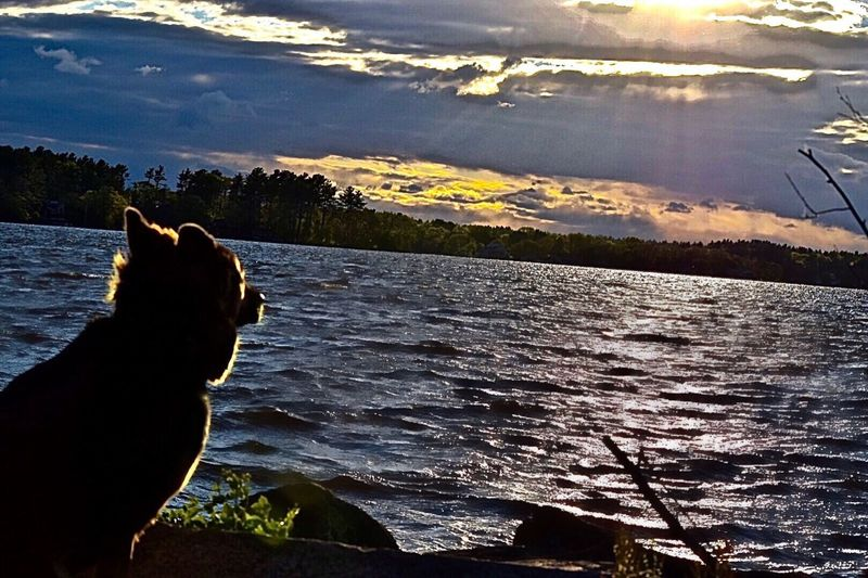 Feel The Journey Cloudy Day Everything's Beautiful Massachusetts Freetown Always Chasing The Sun Sunset Puppy Water Calming Relaxing Play With The Animals Purebred Germanshepherd Middleboro Massachusetts People Of The Oceans