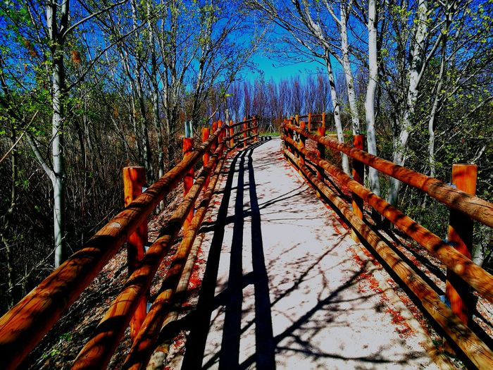 Low Angle View Nature Wood - Material Beauty In Nature Fragility Nature No People Day Plant