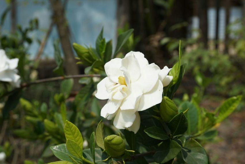 Flower Memycameraandi Newbie