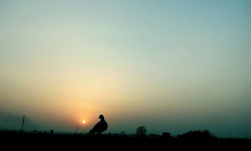 sun set🐦♥ Naturelovers Nature_collection Nature Photography Beauty In Nature Evenningtime EyeEm Nature Lover EyeEm Gallery EyeEm Selects Sunset Silhouette Sky