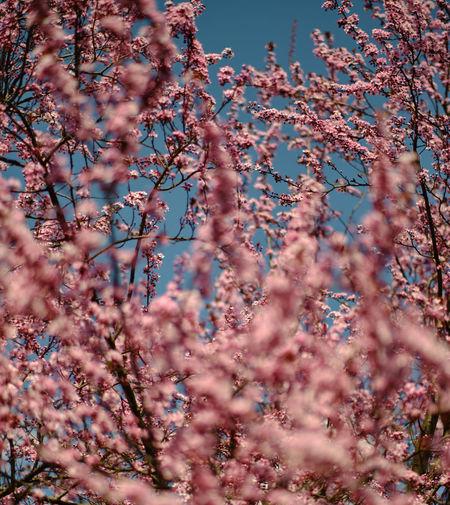 Close-up of cherry blossom against sky