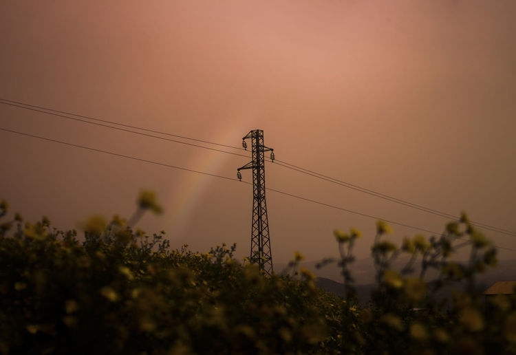 Technology Sky Cable Plant Electricity  Electricity Pylon Nature Connection Sunset Fuel And Power Generation No People Power Supply Power Line  Low Angle View Growth Outdoors Clear Sky Tree Beauty In Nature Land Telephone Line
