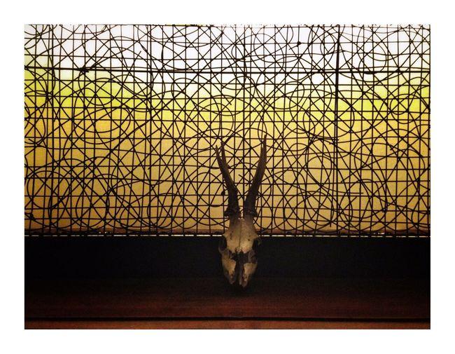 Crâneur Still Life Minimalism Bones Animal Themes Taxidermy No People One Animal Indoors  Day Close-up