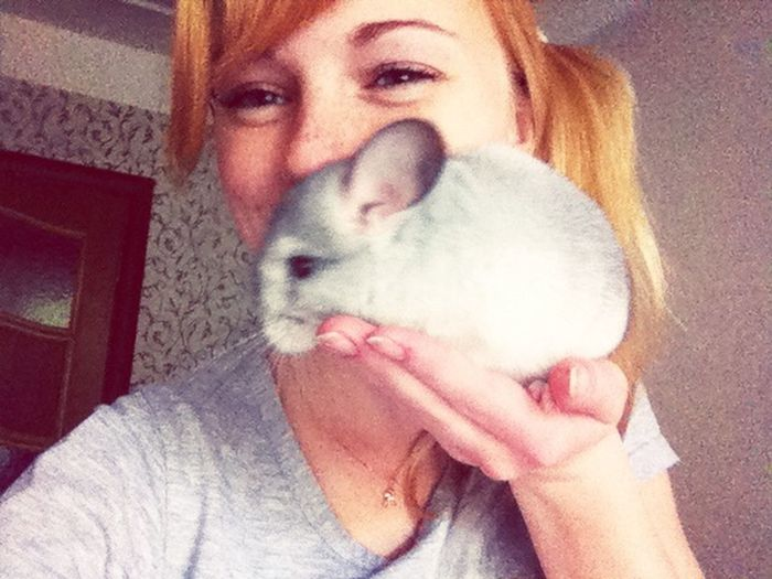 Chinchilla Animal Funny