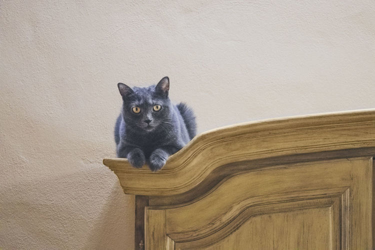 Portrait Of Cat On Wooden Closet Against Wall